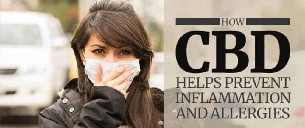 cbd for allergies inflammation and preventing allergies