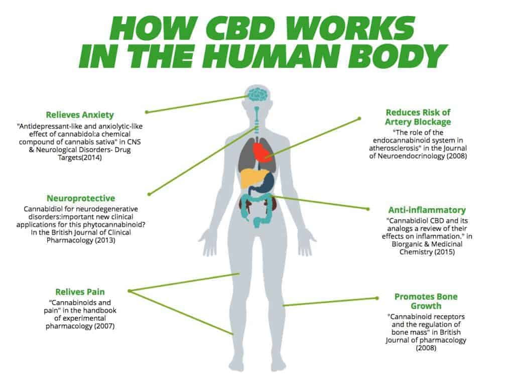How does CBD work